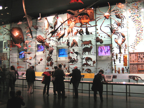Crazy See World At The American Museum Of Natural History