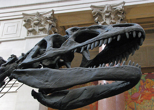 The T-rex Is Shown Up Close At The American Museum Of Natural History