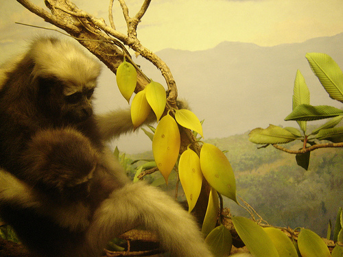 Realistic Wildlife Amidst Painted Backdrops Abound At The American Museum Of Natural History