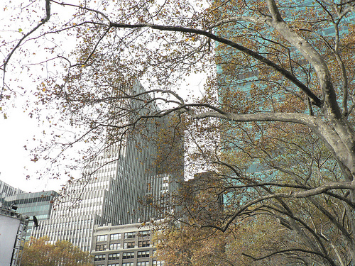 A Perfect Look Up From Bryant Park At The Amazing City Around It.