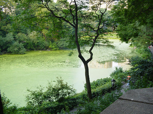 The Greenery Of Central Park South In July.