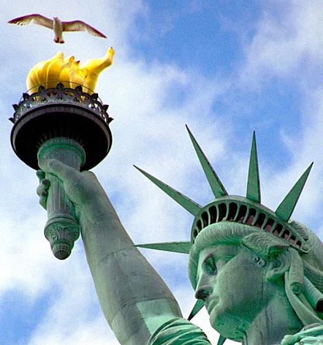 Seagull Flying High Over Liberty Island.