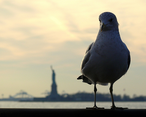 A Seagull Rests At Liberty Island, The Place Where Dreams Started.