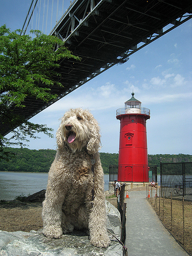Even Dogs Pose Here For The Little Red Lighthouse.