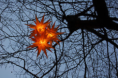 Earthly Stars - Giving Life To The Trees Of Madison Square Park, Named After James Madison