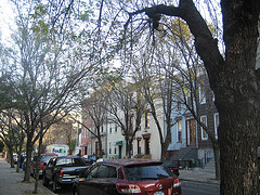Greenpoint Back Streets; Huron Or India Or Java Street Somewhere. Trees!