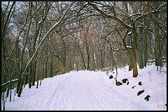 Snow-Covered Path In Inwood Hill Park, Upper Manhattan