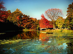 The Leaves Change Into Gorgeous Autumn Colors In Prospect Park In Brooklyn.