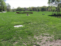 View Of Grass, Trees And People Enjoying A Nice Day In Prospect Park.