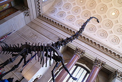 Four Million People Visit The Dinosaurs At The American Museum Of Natural History Each Year