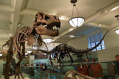 Classic View Of The Dinosaur Skeletons In The American Museum Of Natural History