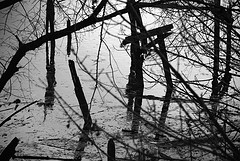 Sticks And Trees Mired In The Flooded Banks Of The Bronx River
