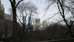 Looking Through Central Park Winter Trees At The Manhattan Skyline