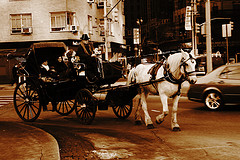 A Couple Of Travelers Travelling By Horse Cart At Central Park South