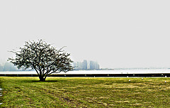 Tree On Ellis Island With Manhattan In The Background