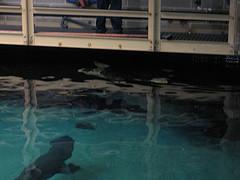 Looking Below At The Sharks At The New York Aquarium