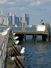 Seagulls Gaze Out Upon New York Harbor From Their Resting Places Along A Pier.