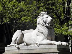 Library Lion Sits Regally Before New York Public Library's Central Branch