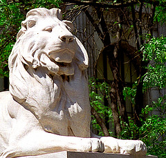 The Lion Statue: Landmark Of The New York Public Library