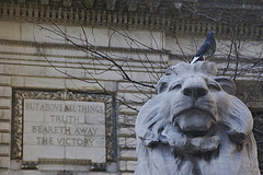 A Bird On A Lion Statue Outside The New York Public Library.