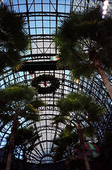 Palms And Christmas Wreaths Contrast At One World Financial Center With The Twin Towers In The Background