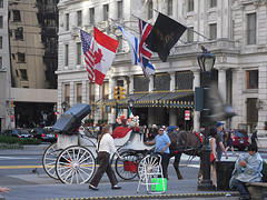 In Front Of The Plaza Hotel Horse Drawn Carriage Wait To Give Scenic Tours Of The City.