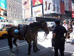 It Is Quite Common To See Horse Patrols In Times Square As The Nypd's Presence.