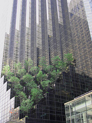 An Interesting Display Of Foilage Going Up The Side Of The Trump Tower.