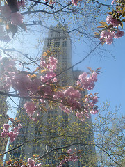 Cheery Blossoms Bloom Front Of The Woolworth Building, Which Used To Stand Between The World Trade Towers.